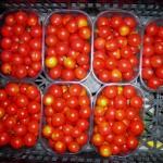 paradižnik češnjevec